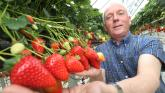 'A sight to behold': Waterford man helps launch Celebrate Strawberry Season campaign
