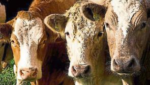 Tipperary farmers urged to apply for €8bn EU Covid-19 fund
